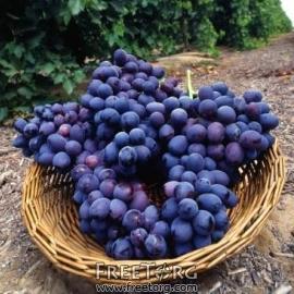 Виноград и молочные продукты укрепляют кости