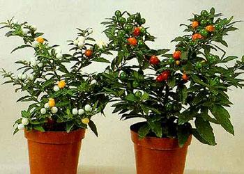 15 неприхотливых комнатных растений для самых занятых лентяек