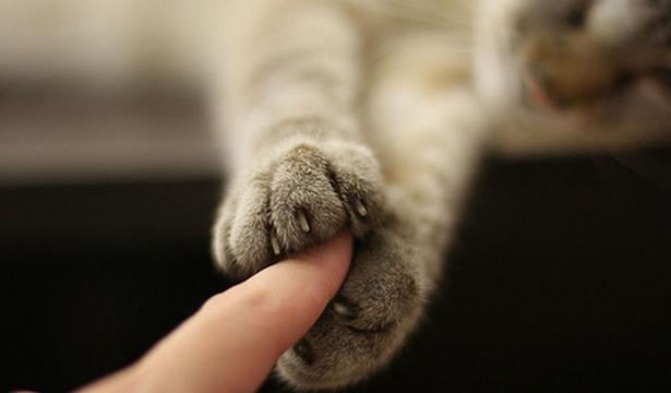 Кототерапия: как вылечиться с помощью кошки?