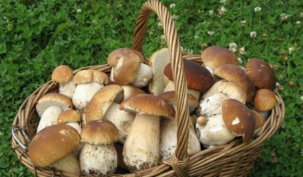 Ученые доказали, что грибы помогают похудеть