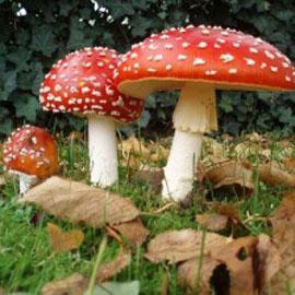 Как не умереть от ядовитых грибов