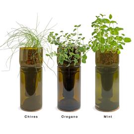 Огород на подоконнике: выращиваем специи и травы