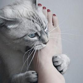 Кошачья весна: таблетки или кастрация?