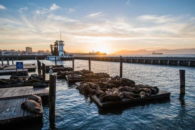 гавань в Сан-Франциско