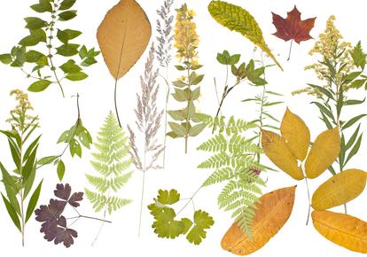 Кроме гербария, из листьев можно сделать разнообразные аппликации в виде природы, деревьев, животных или необычных...