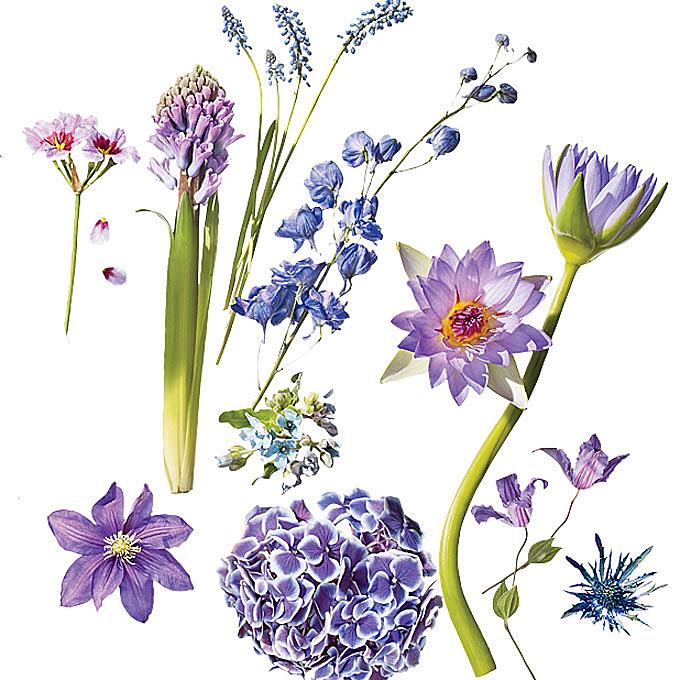 Словарь невесты выбираем цветы для