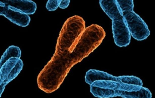 мужчины вырождаются у хромосома