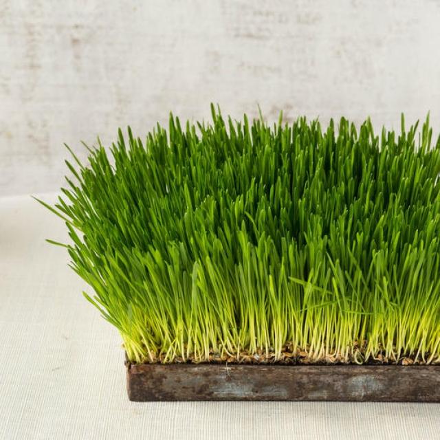 травяная корзина на пасху