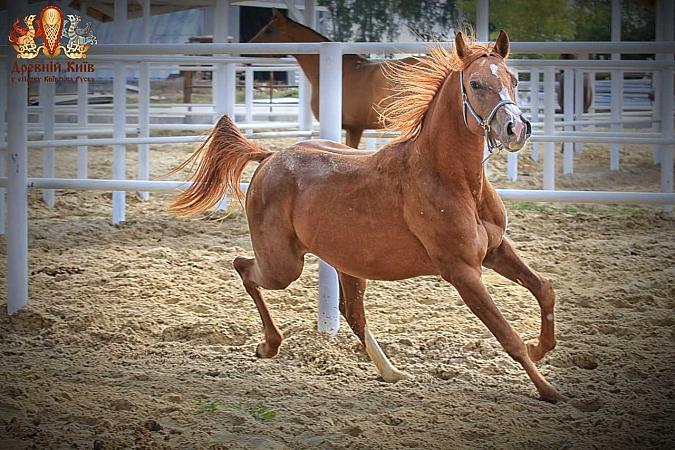 Куда пойти 5-6 сентября выставка лошадей