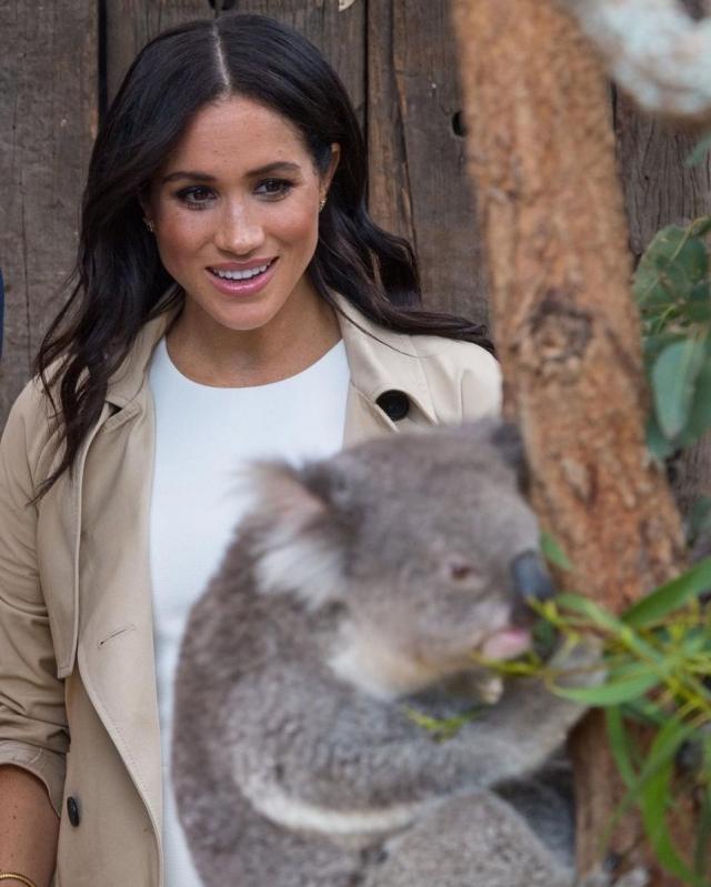 меган и гарри коала