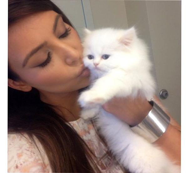 котенок Ким Кардашьян