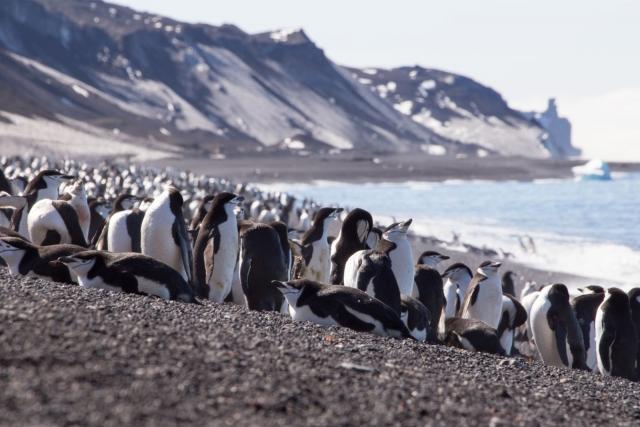 зачем ехать в Антарктиду