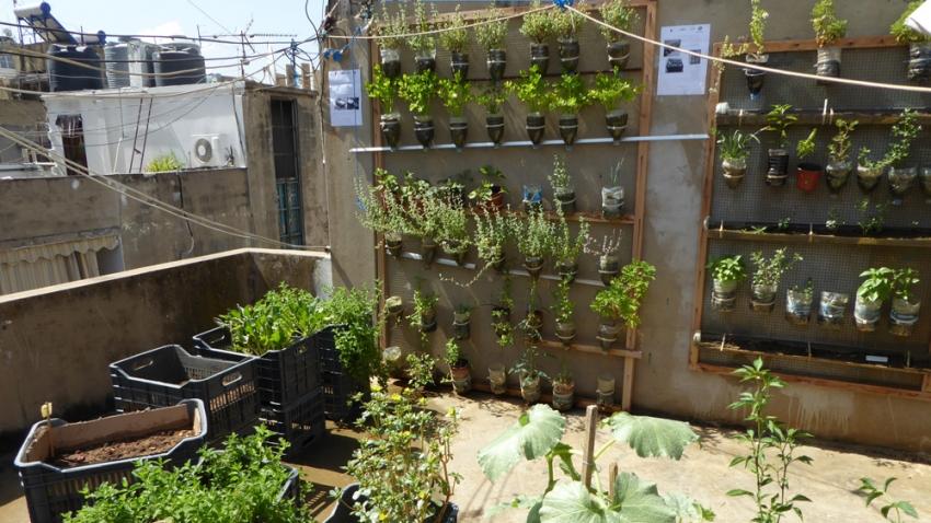 for Terrace vegetable garden kerala