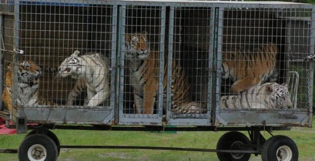 закон об усилении ответсвенности за жестокое обращение с животными принят