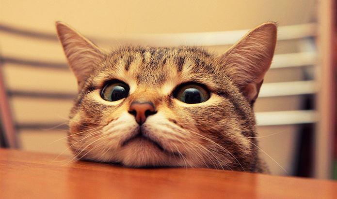 фотка котика