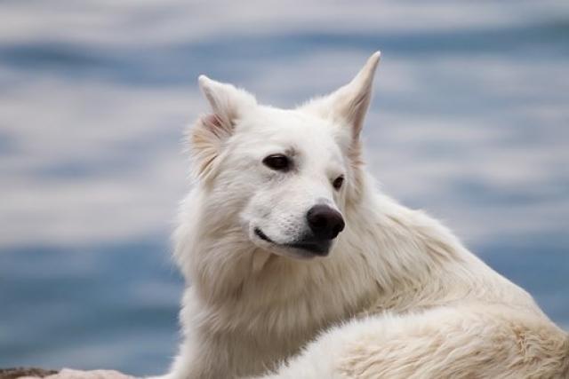 Гороскоп на 8 ноября 2019: доброму человеку бывает стыдно даже перед собакой