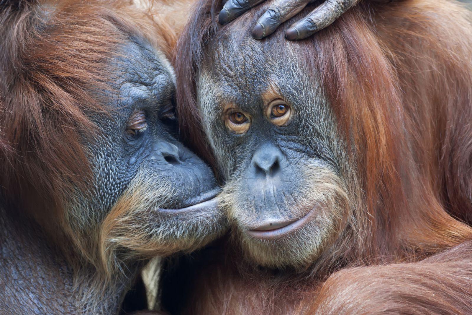 гороскоп на 2016 год обезьяны