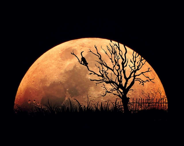 Полнолуние в августе 2019 года. Фазы Луны, календарь