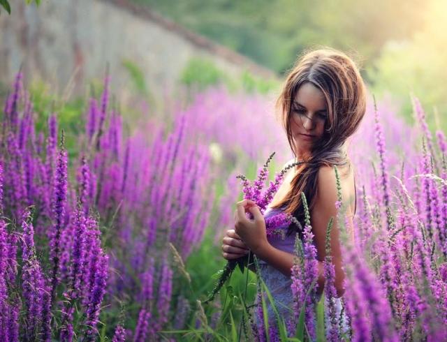 богородицкая трава фото
