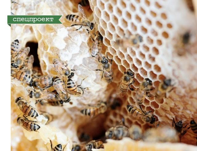 Пустые полки магазинов: почему так важно сохранить пчел?