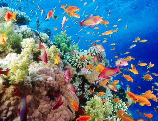 Эксперты назвали стоимость Большого Барьерного рифа цена впечатляет