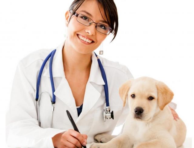 Секс с ветеринаром