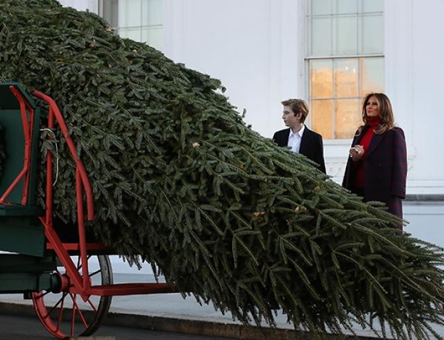 ВБелый дом ранее времени привезли рождественскую елку