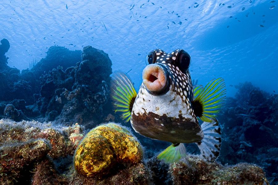 Comedy Wildlife Photography Awards опубликовала самые комичные фото животных - фото №14