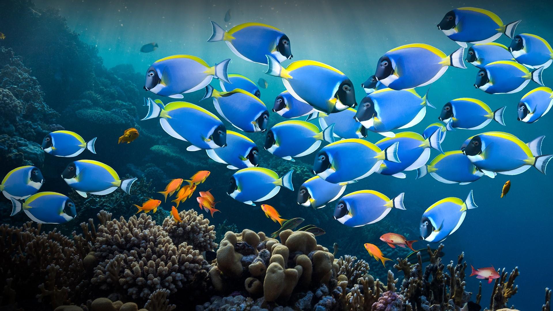 Всемирный день океанов: подборка самых ярких фото - фото №4