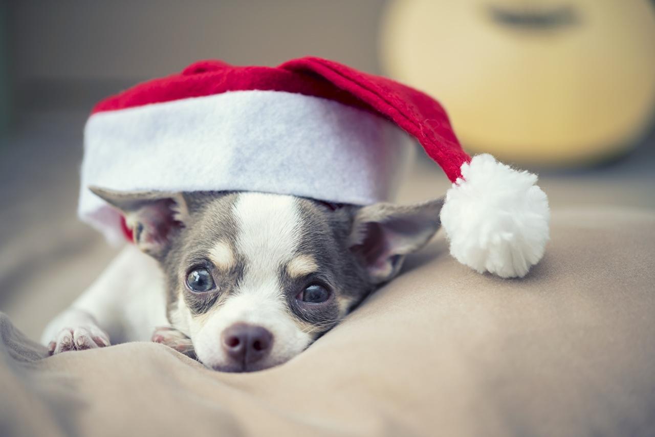 праздник сегодня 19 декабря