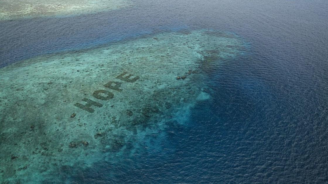 """Pantone представил новый оттенок """"Надежда"""": он посвящен восстановлению коралловых рифов - фото №2"""