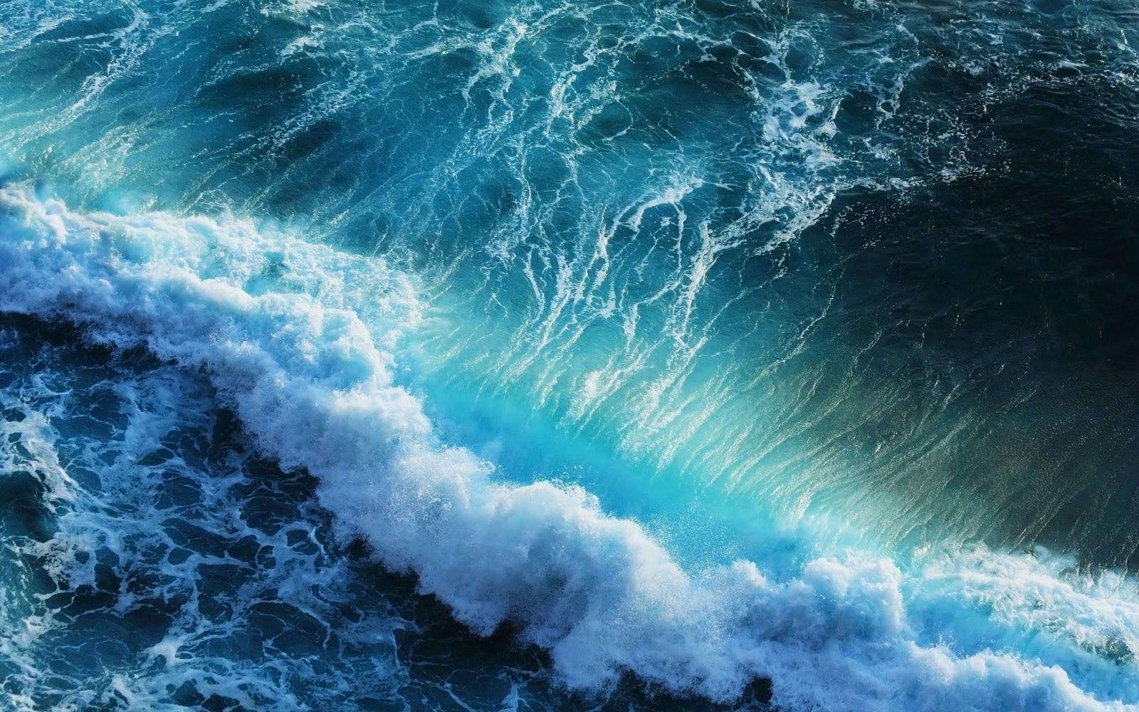 Всемирный день океанов: подборка самых ярких фото - фото №11