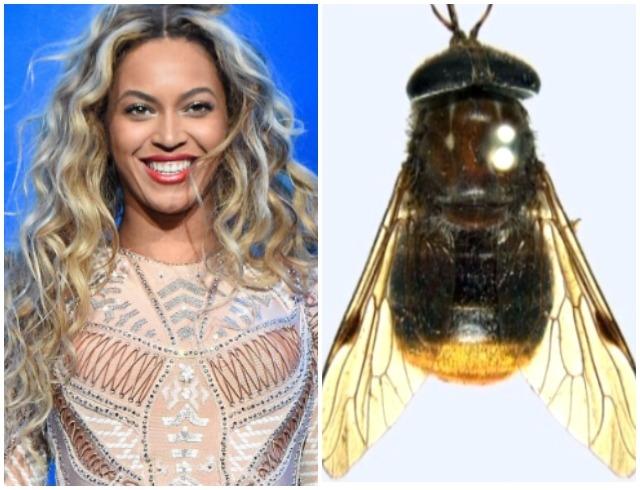 бейонсе насекомое