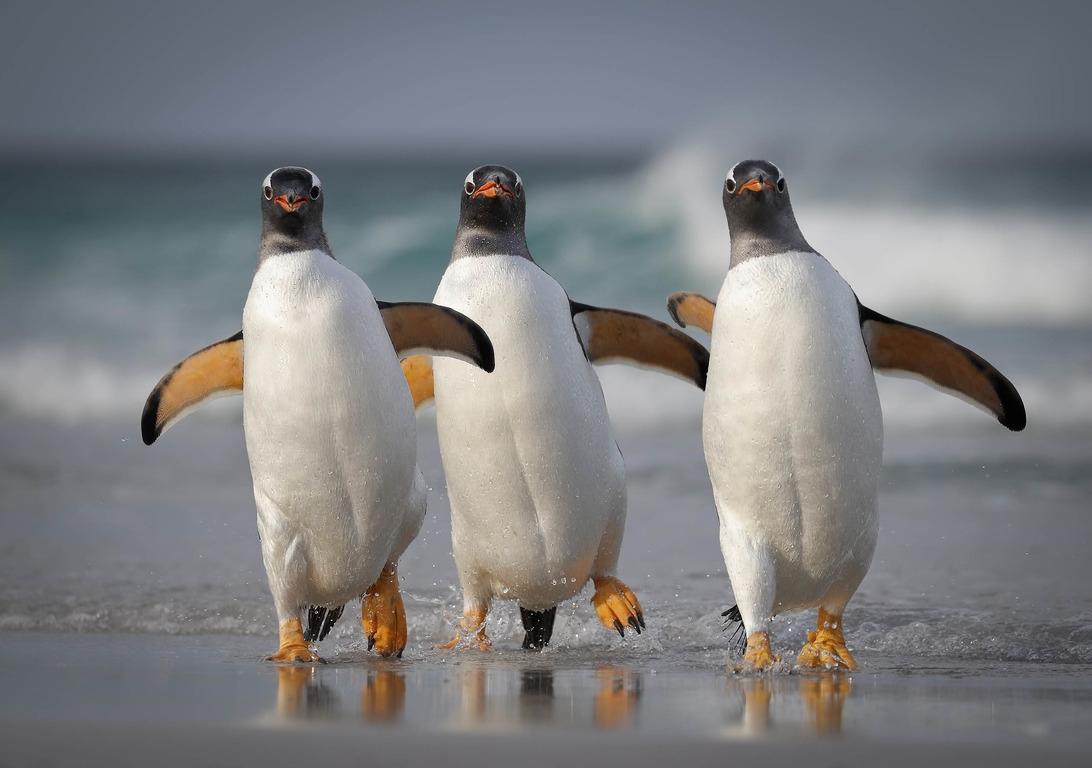 Comedy Wildlife Photography Awards опубликовала самые комичные фото животных - фото №5