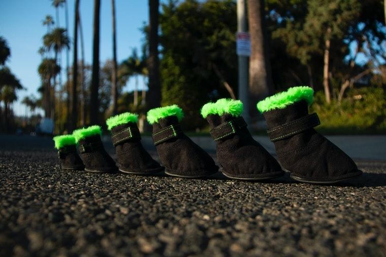 Самая милая коллекция 2020 года: UGG выпустили обувь для домашних питомцев (ФОТО) - фото №3