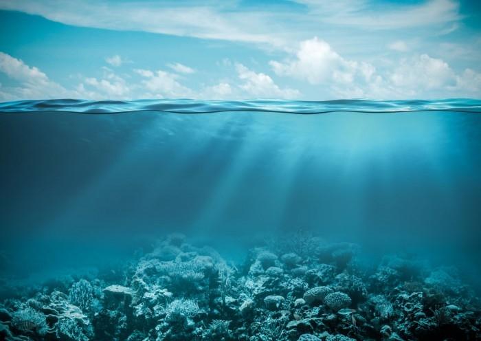 Всемирный день океанов: подборка самых ярких фото - фото №23