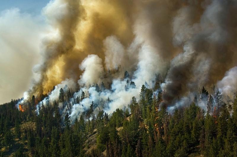 горят леса