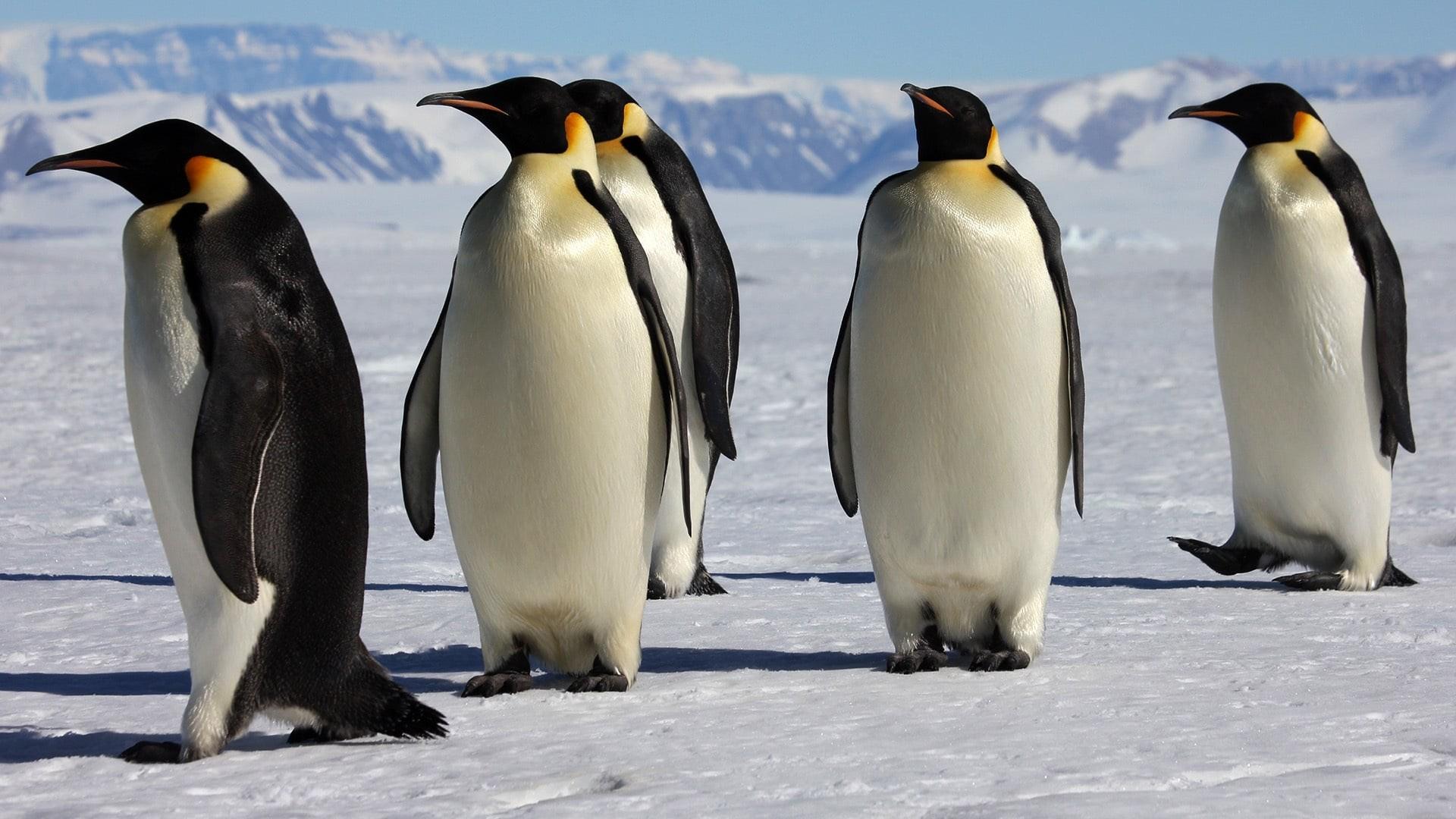 документальные фильмы о пингвинах