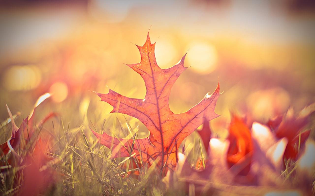 церковный праздник сегодня 12 ноября