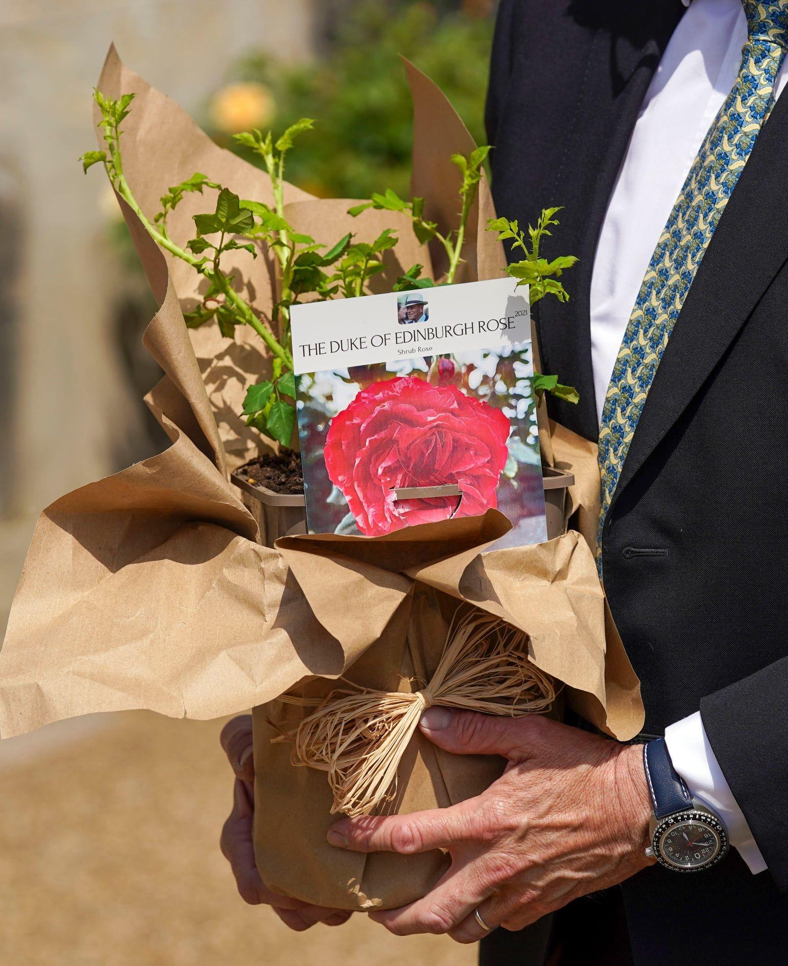 сорт роз в честь принца филиппа