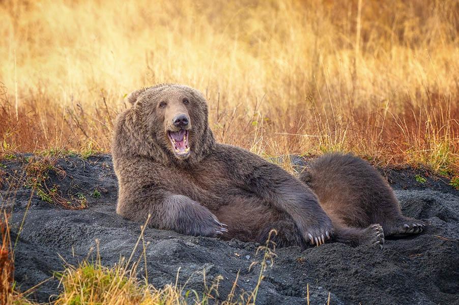 Comedy Wildlife Photography Awards опубликовала самые комичные фото животных - фото №13