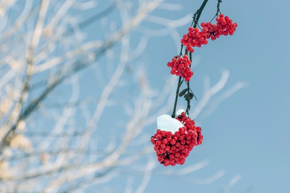 праздник 4 декабря