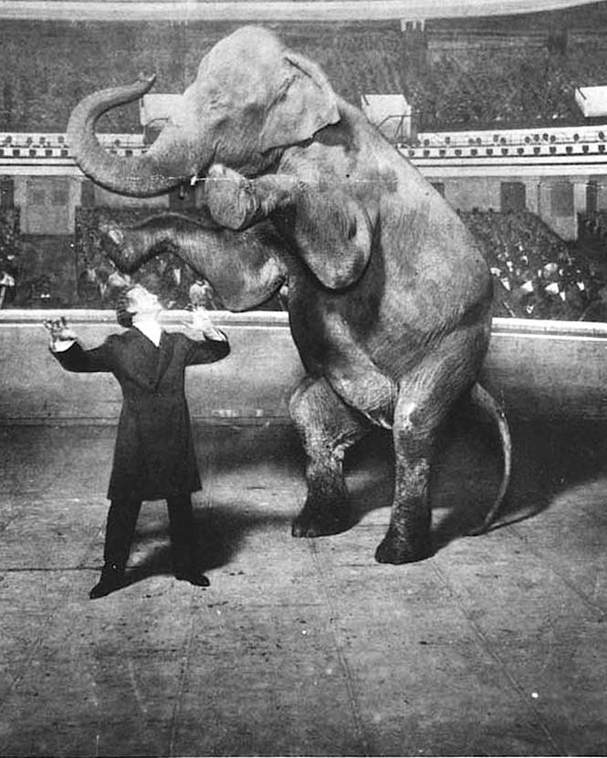 Гарри Гудини фокус слон