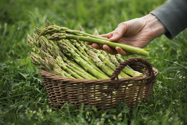 Спражовая мода в Украине: сколько можно заработать на этом овоще? - фото №1