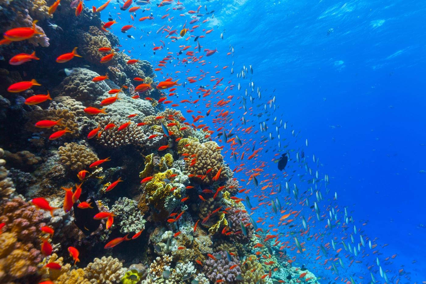 Всемирный день океанов: подборка самых ярких фото - фото №3