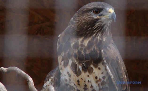 Зоопарки на карантине: как проходит жизнь у животных и скучают ли они по посетителям (ФОТО) - фото №5