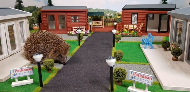 В Великобритании открылся первый в мире парк для ежей: смотрите, как он выглядит (ФОТО+ВИДЕО) - фото №1