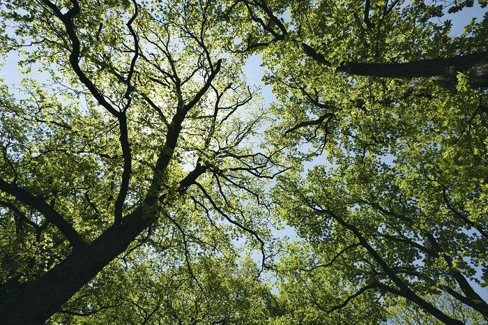 Фонд Yves Rocher висадив 100 мільйонів дерев у світі - фото №3