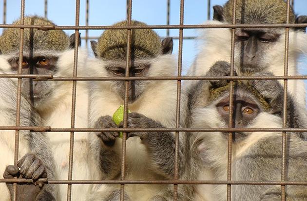 Зоопарки на карантине: как проходит жизнь у животных и скучают ли они по посетителям (ФОТО) - фото №4