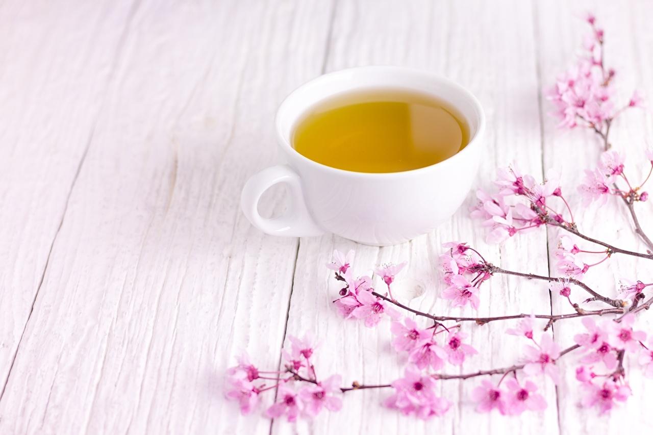 зеленый чай чайная церемония